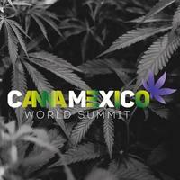 Large_cannamex__prof