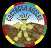 Large_cacta